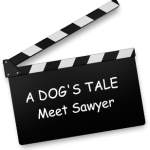 A Dog's Tale – Allianz