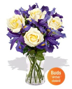 yellow-roses-with-purple